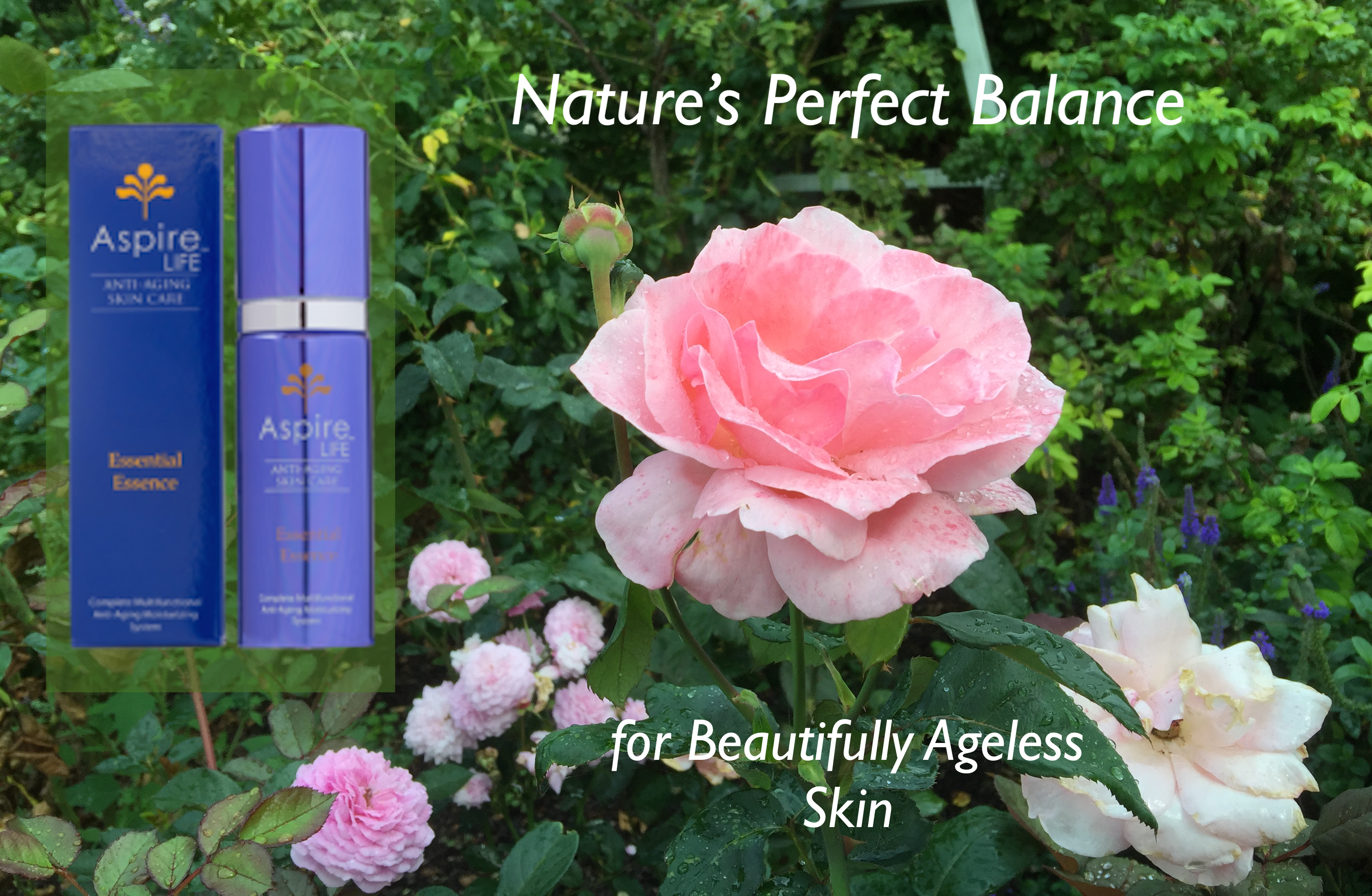 AspireLIFE Essences Beauty Rose AD
